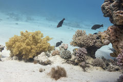 Coral reef in tropical sea, underwater Stock Photos