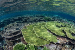 Coral Reef in Tropics Stock Photos