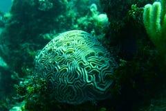 Coral Reef, tropische vissen en het oceaanleven in het Caraïbische overzees Stock Foto