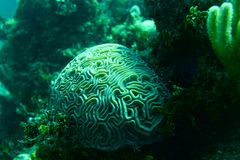 Coral Reef, tropisk fisk och havliv i det karibiska havet Arkivfoto