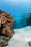 Coral reef under the surface Royalty Free Stock Image