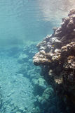 Coral reef under the surface of water in tropical sea Royalty Free Stock Photo