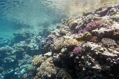 Coral reef under the surface of water in tropical sea,  underwater Royalty Free Stock Images