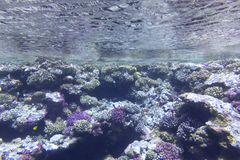 Coral reef under the surface of water in tropical sea,  underwater Stock Images