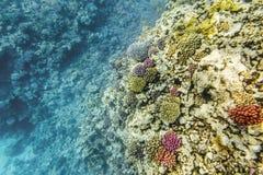 Coral Reef under vatten av Röda havet royaltyfri foto