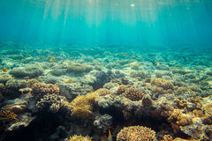 Coral reef under water royalty free stock photography