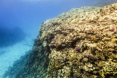 Coral Reef under water of the Red Sea Stock Photos