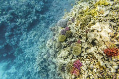 Coral Reef under water of the Red Sea Royalty Free Stock Photo