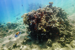 Coral Reef under water of the Red Sea Stock Images