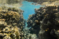 Coral Reef under water of the Red Sea Stock Photo