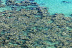 Coral reef under water Royalty Free Stock Photos