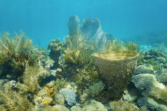 Coral reef under the water with vase sponge Stock Image