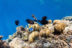 Coral reef underwater Royalty Free Stock Photography