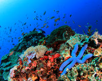 Free Coral Reef Underwater Stock Images - 35828364