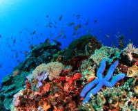 Coral Reef Underwater Imagenes de archivo
