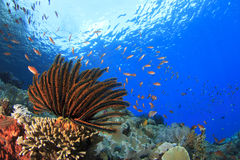 Coral Reef Underwater Immagine Stock