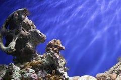 Coral Reef Underwater Imagen de archivo libre de regalías