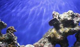 Coral Reef Underwater Fotografía de archivo libre de regalías