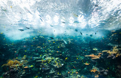 Coral reef Royalty Free Stock Photography