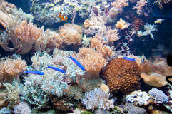 Coral reef. Underwater coral reef in an aquarium with a multitude of marine life Stock Image