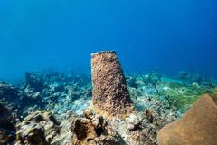 Coral reef underwater. Beautiful colorful coral reef and tropical fish underwater in St Lucia Caribbean stock photos