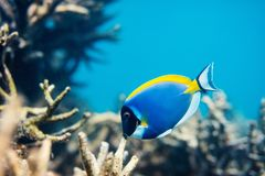 Coral reef underwater. Beautiful colorful coral reef and tropical fish underwater in Maldives Royalty Free Stock Image