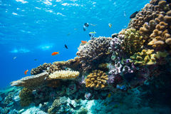 Coral reef underwater Stock Photo