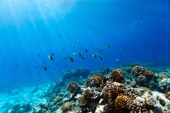 Coral reef underwater Royalty Free Stock Photos