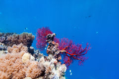 Coral reef underwater Stock Photos
