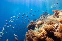 Coral reef underwater Stock Images