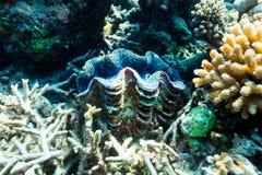 Coral reef underwater Stock Photo