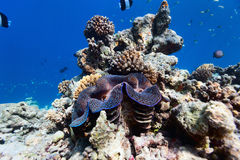 Coral reef underwater Stock Photography