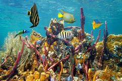 Coral reef underwater colors Stock Image