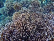 Coral reef underwater. Island Lipe ,Thailand Stock Photo
