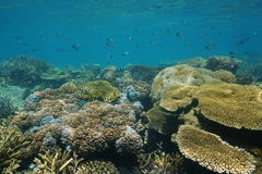 Coral reef underwater New Caledonia Pacific ocean Stock Image