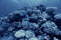 Coral reef underwater photo Stock Image