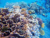 Coral reef underwater photo. Snorkeling in tropics. Exotic island seaside vacation. Diverse corals in tropical seashore. Undersea landscape photo. Fauna and Stock Photos