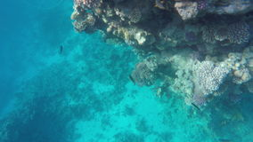 Coral reef Underwater shot. Beautiful underwater clip stock video footage