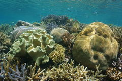 Coral reef underwater south Pacific ocean Stock Images