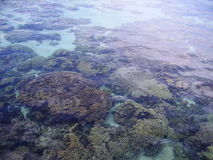 Coral reef. View of coral reef in the water stock photos