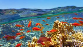 Coral reef viewed from the sea surface stock images
