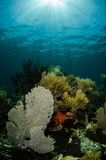 Coral reef. Views from the colorful coral reefs of the caribbean sea Stock Photo