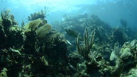 Coral reef. Views from the colorful coral reefs of the caribbean sea stock video