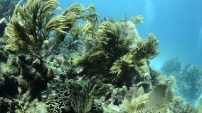 Coral reef stock video footage