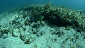 Coral reef. Views from the colorful coral reefs of the caribbean sea stock video footage