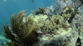Coral reef stock footage