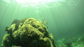 Coral reef. Views from the colorful coral reefs of the caribbean sea stock footage
