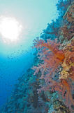 Coral reef wall in the sun Stock Images