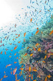 Coral reef wall in the sun Stock Photography