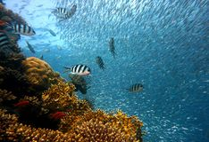 Coral Reef, Water, Reef, Marine Biology Stock Photography